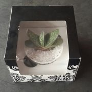 Mini Succulent Gift Box