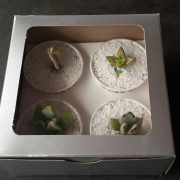 Succulent gift box, succulent cup cake box